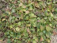 きれぎれの風採 「ロゼット植物」1-10