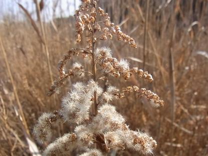 きれぎれの風採 「冬のドライフラワー」1-2