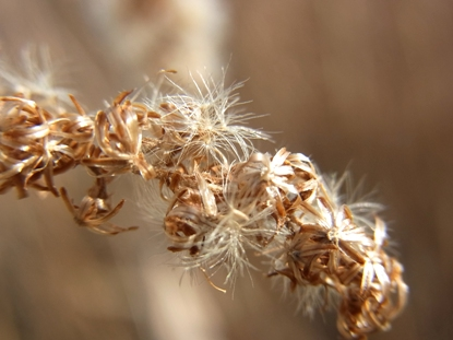 きれぎれの風採 「冬のドライフラワー」1-4