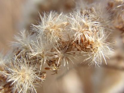 きれぎれの風採 「冬のドライフラワー」1-5