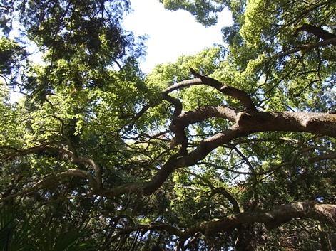 「⑥真横に伸びる枝」
