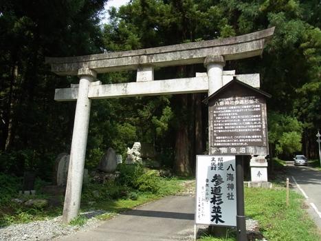 「八海神社参道杉並木〔巨樹〕」