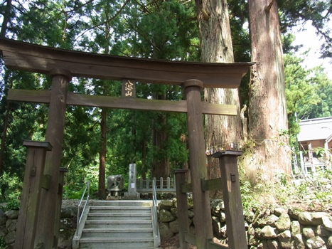 八海神社参道杉並木-8
