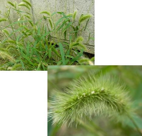 きれぎれの風採 「初秋の花・実」04