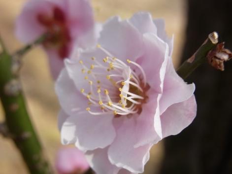 「8.国光~ウェーブ花弁」