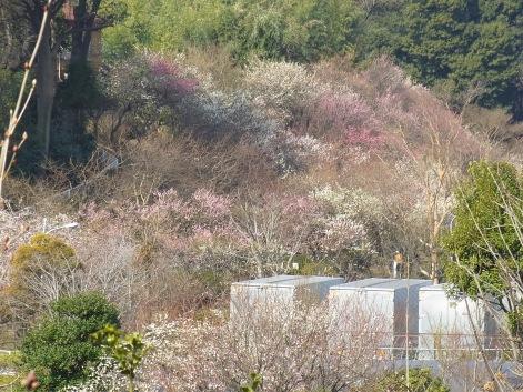 「11.梅園~遠景」