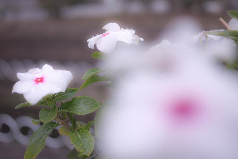20111030-1040324.jpg