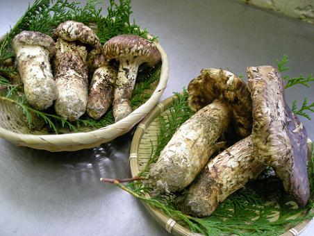 神崎郡の松茸