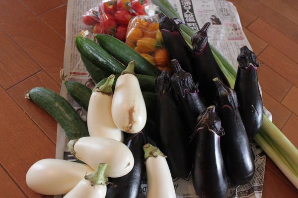 鎌倉野菜横