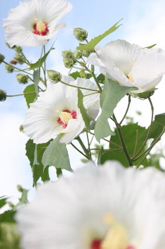 円覚寺の花1