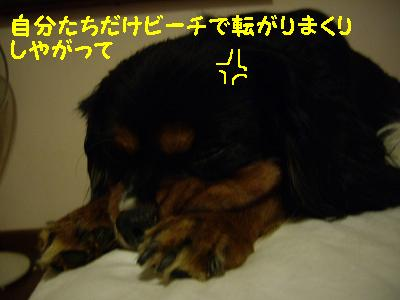 20091102_hachi.jpg