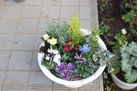 2009.12.1晩秋の庭 (寄せ植え)