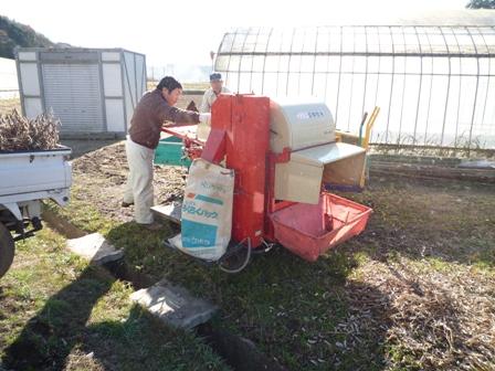 2009.12.19小糸在来脱穀