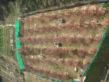 2010.1.15 千葉県建設技術協会視察(橋から見た畑) 008