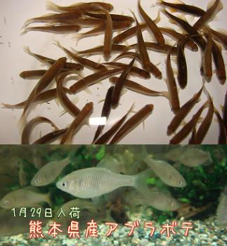2011.1.29【アブラボテ】