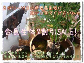 2011.2.8ブログ (7)