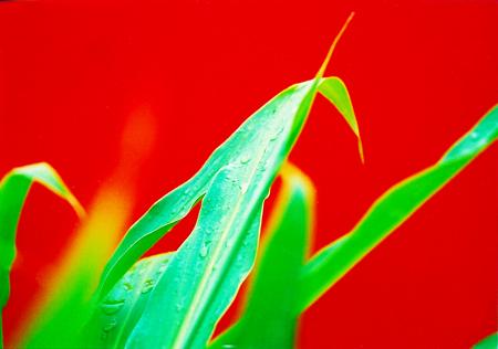キレイナ花1_1up