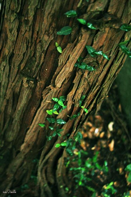 木と芽up2