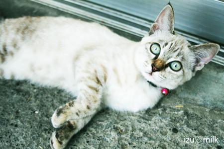 猫_h_up