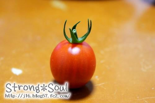 初収穫トマト