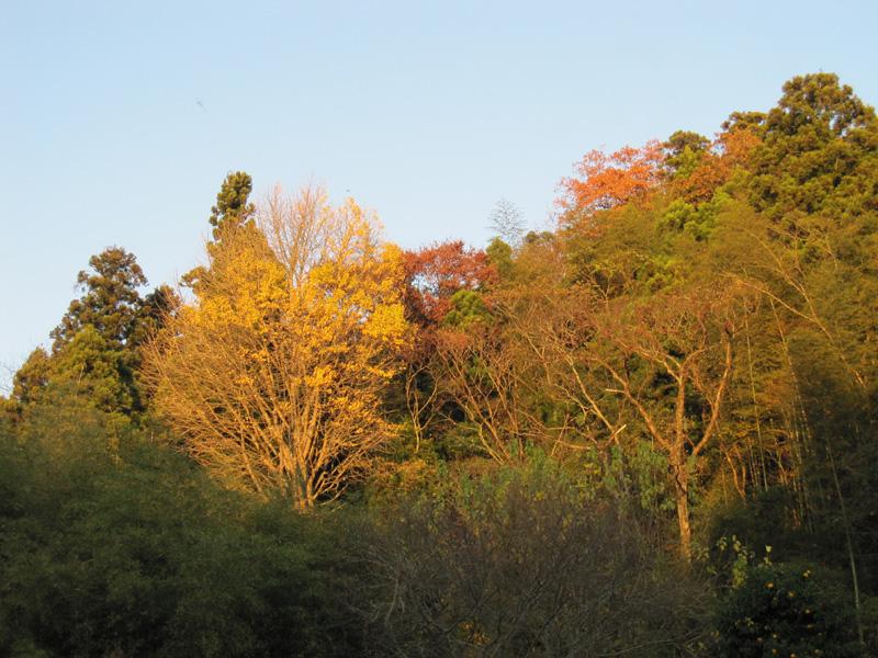 03 autumn