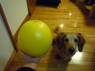 ロンの頭より大きい!