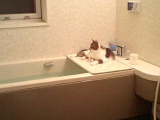 11月11日入浴2