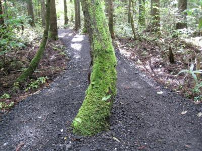 ⑩木にも苔が