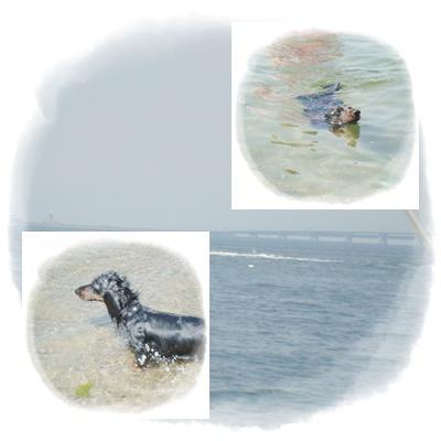 海辺のBBQ4