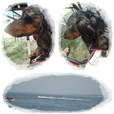 海辺のBBQ2
