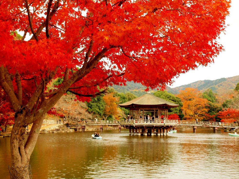 浮見堂の秋