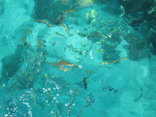 珊瑚、海水魚がいっぱい!