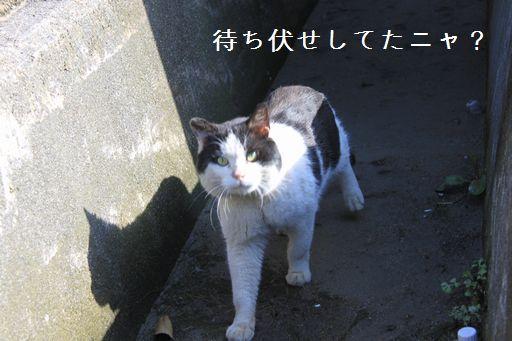 富山にゃんた