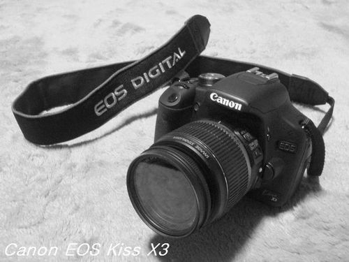 P3232981.jpg