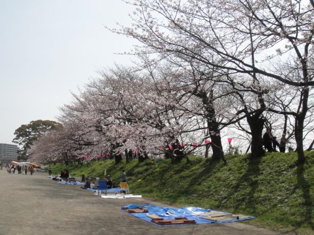 瀬戸川桜まつり