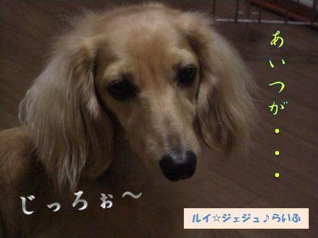1020-9_20091020124141.jpg
