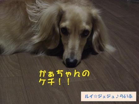 CIMG3358.jpg
