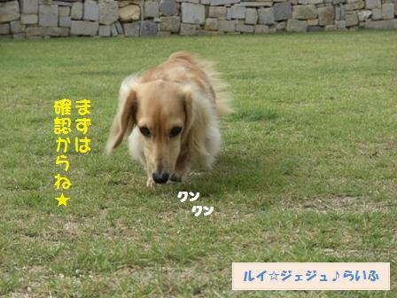 CIMG3428.jpg