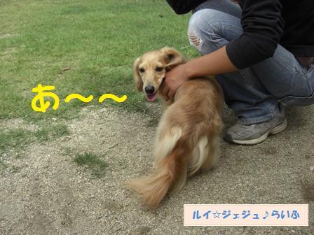 CIMG3439.jpg