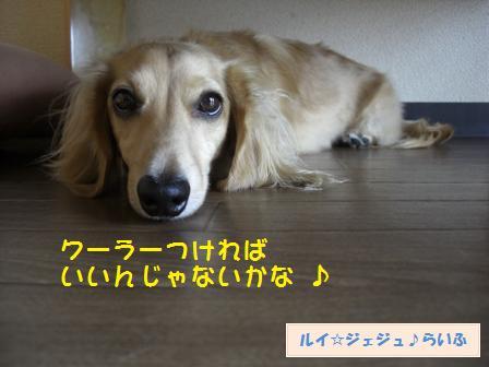 CIMG3570.jpg
