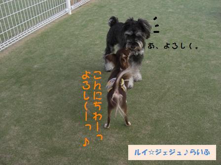 CIMG3734.jpg