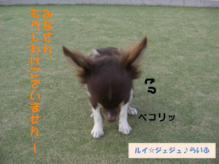 CIMG3743.jpg