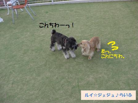 CIMG3744.jpg