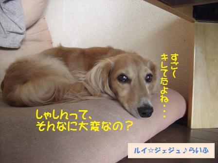CIMG3778.jpg