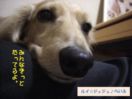 CIMG4141.jpg