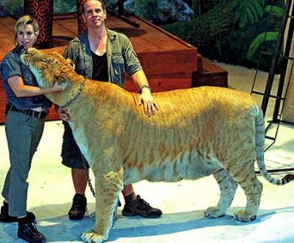 liger w