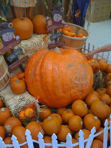 huge pumpkin2
