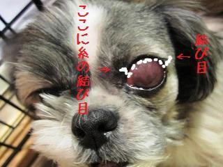 snap_jurichacha_200990223045a.jpg