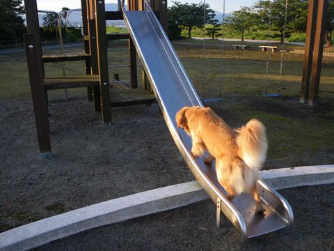 登れるかな?