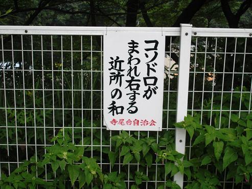 shinyuri1031.jpg